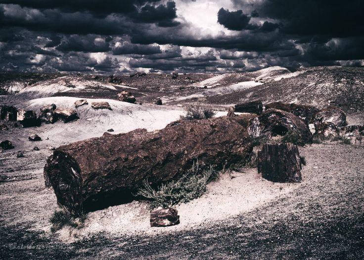 Petrified Forest photography,original art print National Park photo Southwest picture Arizona wall art wood artwork clouds print décor film by KaleidoscopesPHOTO2 on Etsy