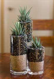 Layered sand/beans/pepples and succulent centerpieces
