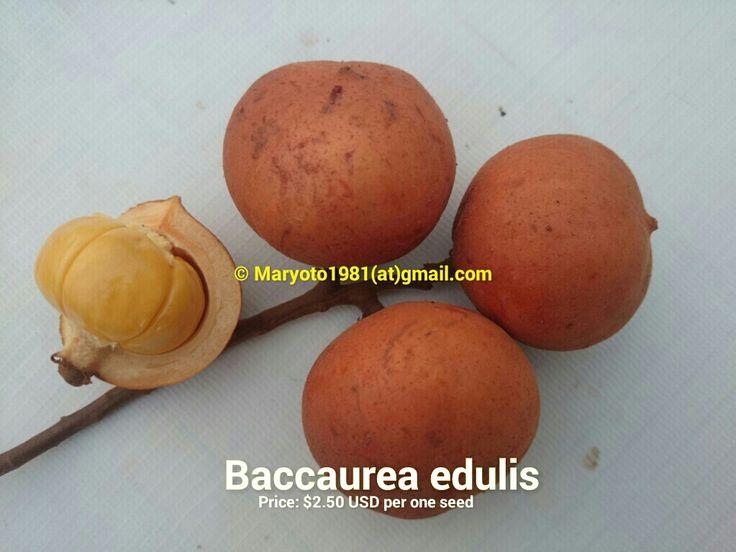 Baccaurea edulis