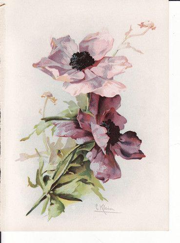 Antique Victorian Botanical Art Print Catherine Klein Flowers Purple | eBay