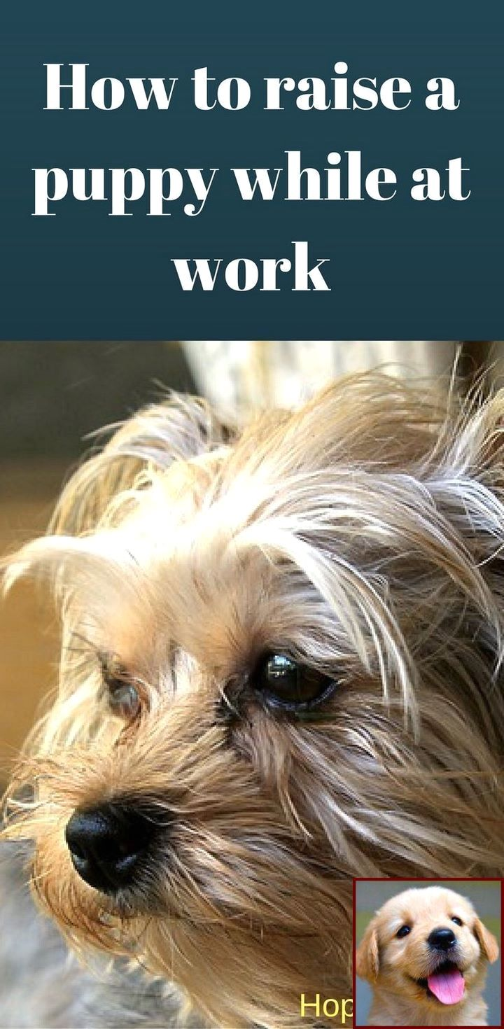 1 Have Dog Behavior Problems Learn About House Training A Puppy