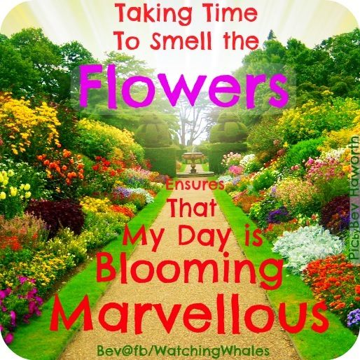 33 Best Flower Quotes Images On Pinterest