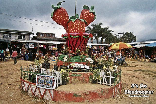 Strawberry farm in La Trinidad