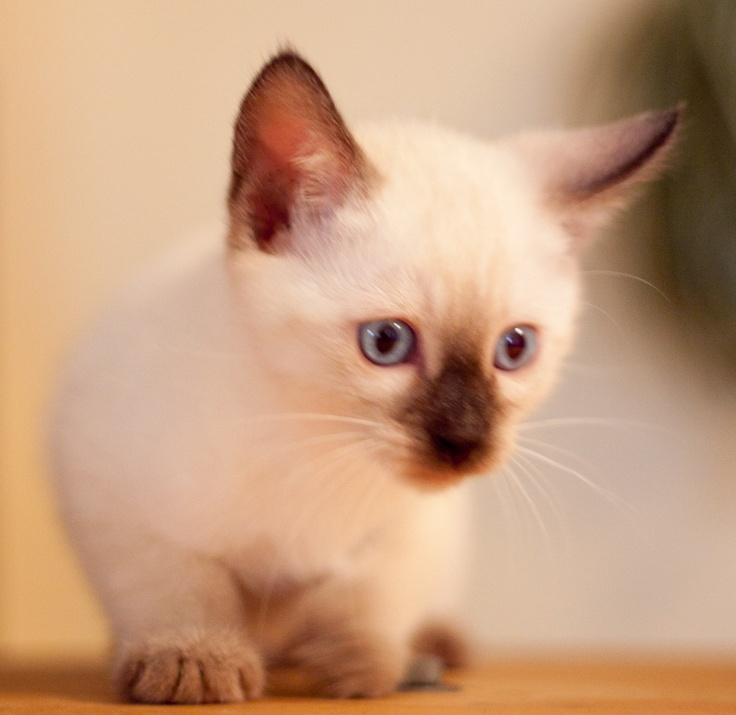 stimulate kitten to poop