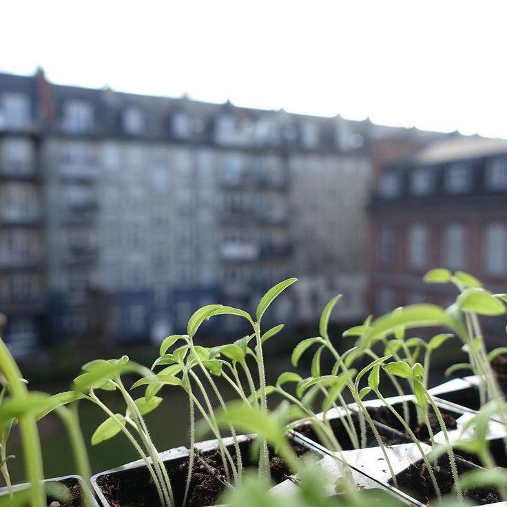3. Floor gardening  Urban gardening på 3. Sal  #urbangardencompany #sprouts #forspire #urbangardening #urbangarden #altanliv #altanhave #balkongodling #balkongliv #dyrkbyen #stadsodling #justaddwater