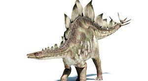 Holka nebo kluk? Nové objevy o stegosaurech