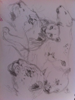 Sketching leopards.