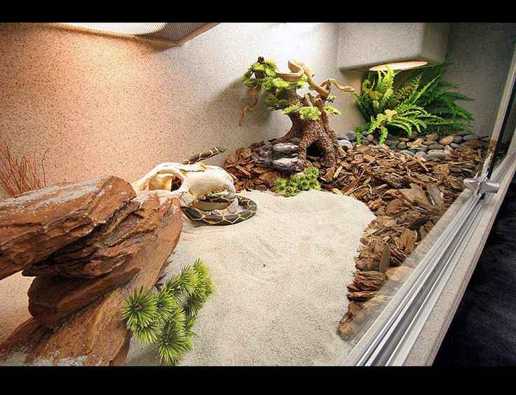 Love the layout of this enclosure
