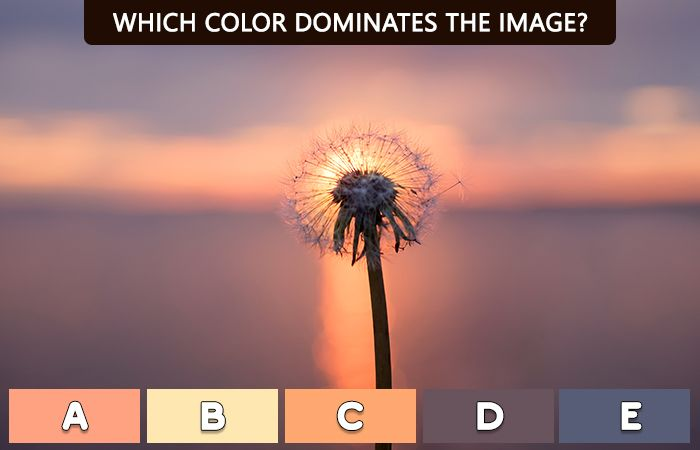 Quiz: A Fun Color Test That Can Predict Your Mental Age