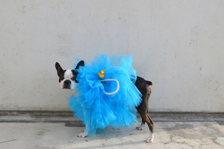 DIY   LOOFAH DOG COSTUME