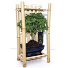 Looking for something a little different? Try this Bonsai in Bamboo.