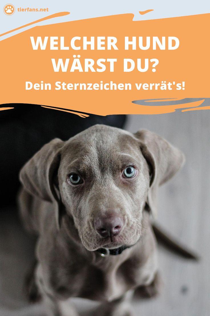 Welcher Hund wärst du? Dein Sternzeichen verrät's! Man sagt, Hunde seien d…