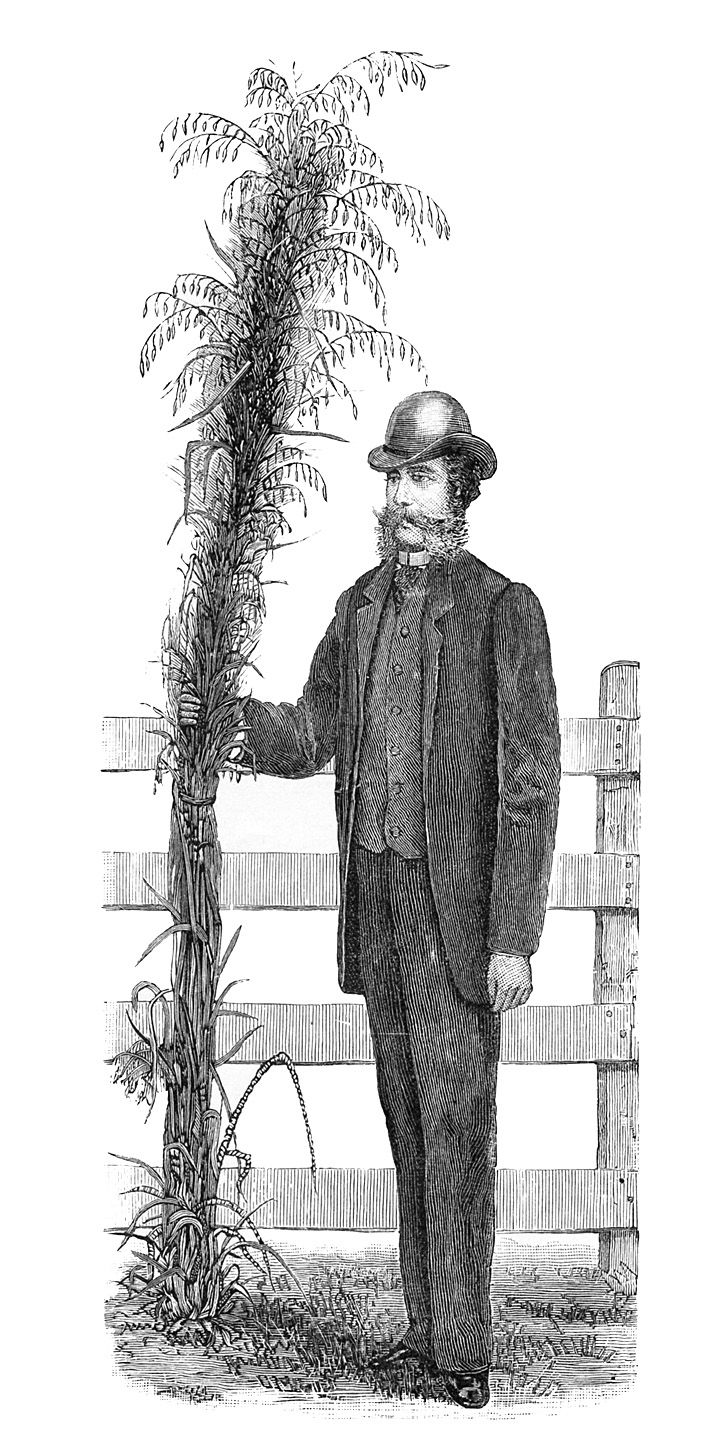 Odd Clip Art - Farmer with Giant Plant - The Graphics Fairy
