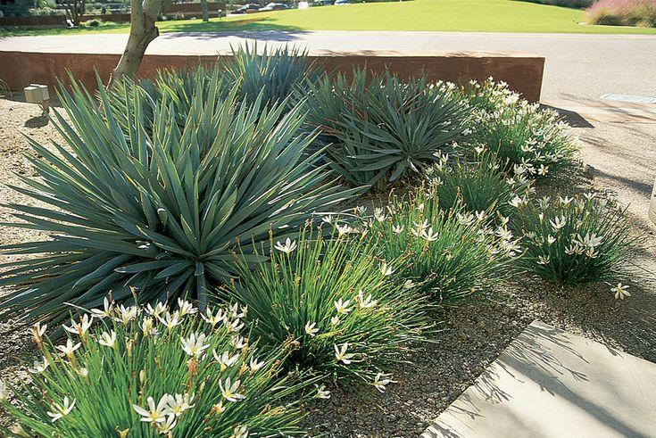 Mejores 240 im genes de plantas ornamentais en pinterest for Piscina y candidiasis