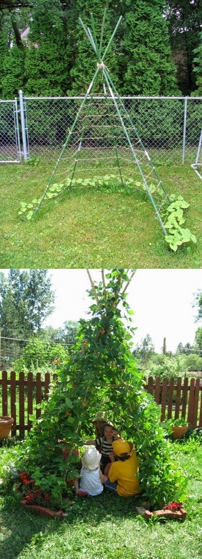 What a cute and cleaver idea! Clear around the planting area, for productive growth of the beans. Great hideaway for kids in the yard, leave the grass in the center.