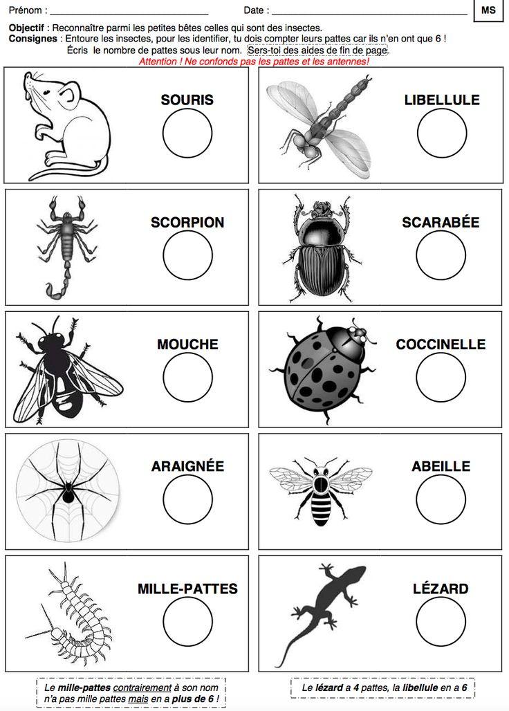 Des dizaines de fiches de travail à imprimer pour le thème des #insectes #printemps