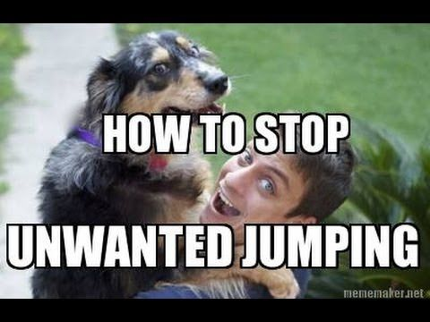 How to Train your DOG NOT to JUMP - YouTube