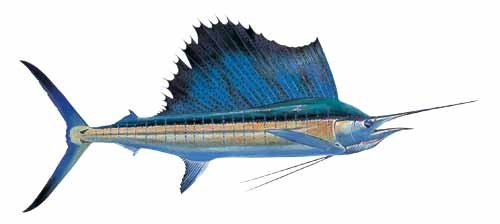 1000 images about florida fish on pinterest alabama for Florida state fish