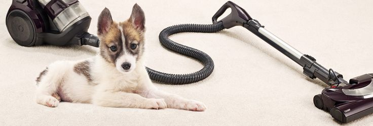 Best Vacuums for Pet Hair - Consumer Reports