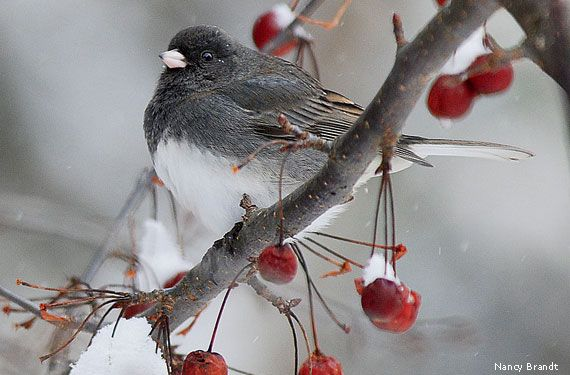 Winter is actually the BEST time for backyard bird-watching! Just provide them with the best food, water and shelter