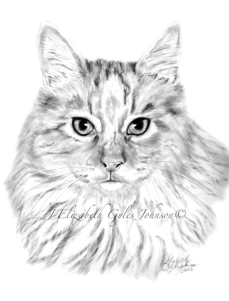 Cat Portraits in Graphite at CreativePencils.com