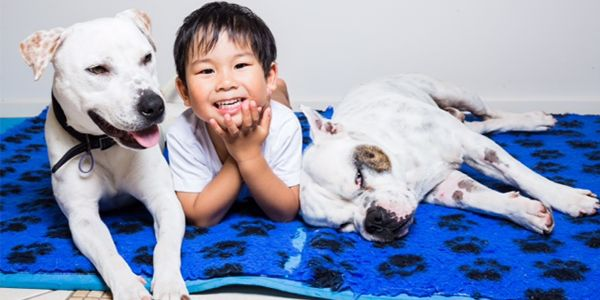 Ariki and Missy became best friends when they came into the care of RSPCA Qld. Fortunately, they found a furever home that could accommodate both of them! They love their new family, and the fact that they can stay together. #myrspcapet #rspcaqld