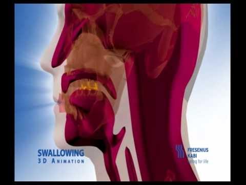 Swallow animation: Difficulti Swallows, Feeding Swallows, Swallows Mechanical, Swallows Animation With, Swallows Animal, Dysphagia Swallows, Speechi Stuff, Normal Swallows, Slp Swallows
