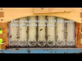 The Flow Hive for honey bees, Love it? Hate it? or Undecided? Price? Review of Quality Control - YouTube
