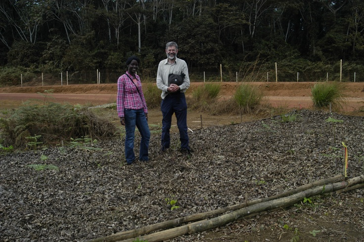 Dr. Martin Cheek of Kew and Congolese botanist Teva Kami at one of our trials where we are investigating which of our alley cropping candidate species can rival Inga's weed suppressing ability.