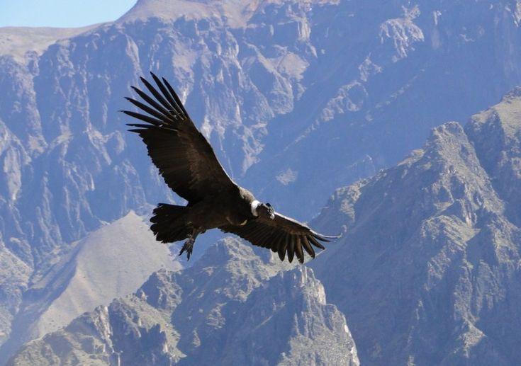 Reserva Natural del Cóndor Andino | Mendoza Travel