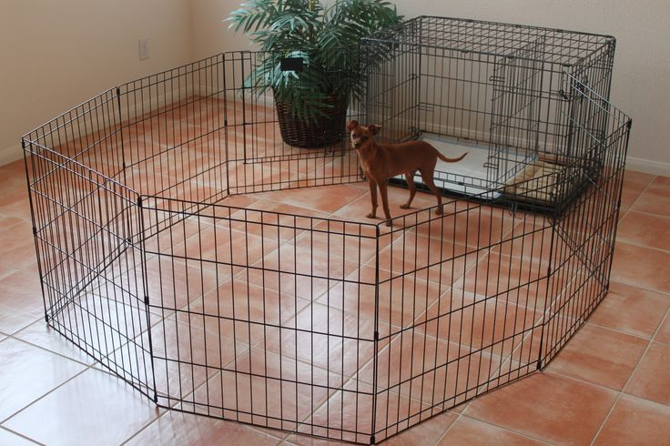Dog Playpen - The PTPA Playpen is great for when your puppy has already been potty trained by the PTPA. It easily attaches to your PTPA and gives your puppy/dog more space when you are unable to supervise them. Click here for more details: ModernPuppies.com