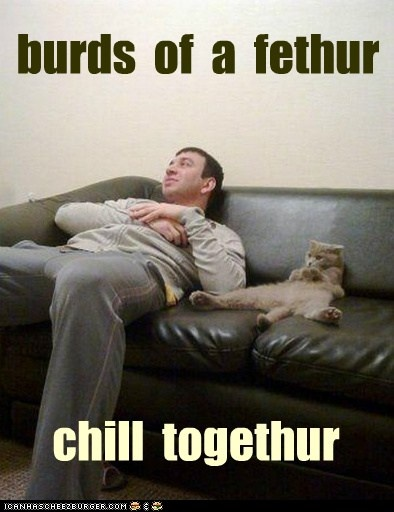 burds  of  a  fethurCopy Cat, Laugh, Funny Cat, Sons, Pets, Fathers, Kitty, Man Caves, Animal