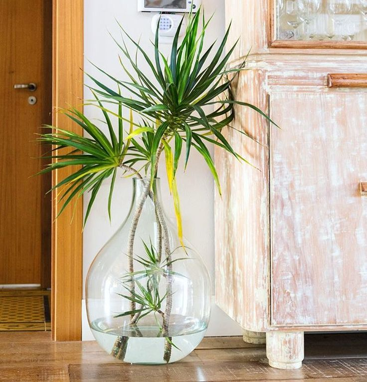 A garrafa que guardava rolhas virou um vaso de plantas em água!