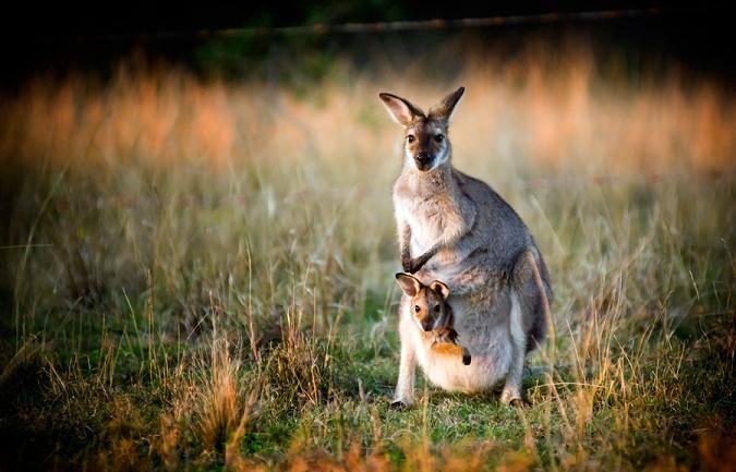 Kangaroo Island Ecopia Retreat, Kangaroo Island, SA http://www.ozehols.com.au/holiday-accommodation/south-australia/kangaroo-island #southaustralia #southaustraliaholidays