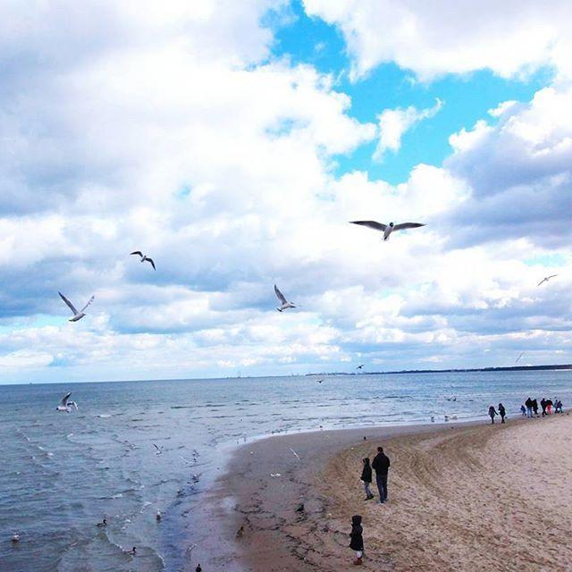#sopot#gdansk #poland#sea#balticsea #bluesky #clouds #beach #bird #water#nature #naturelovers #landscape #natureporn #naturepoland #explorepoland #lubiepolske #instanature #instagood