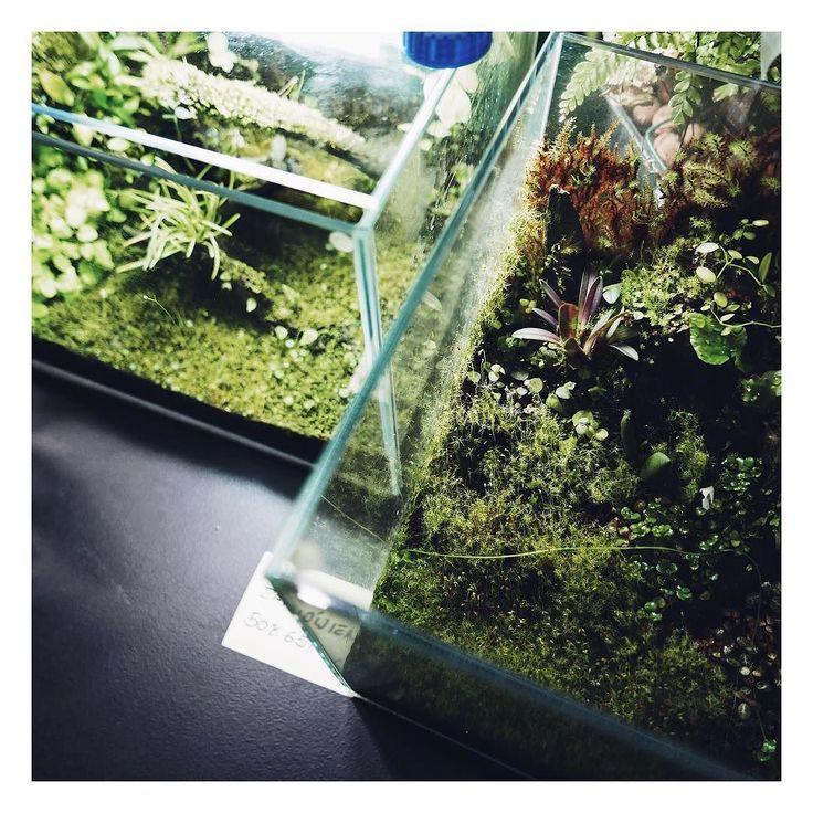 Szklane zielone akwaria   ____________________ #rosliny #kwiaty #kwiatysapiekne #plants #floral #floraldesign #flowers #flora #florals #mech