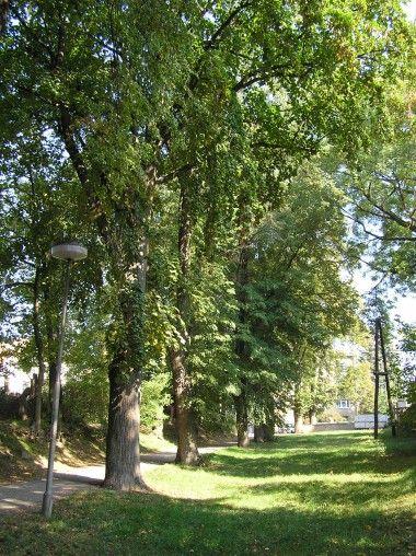 Lipové stromořadí Na Hrádku