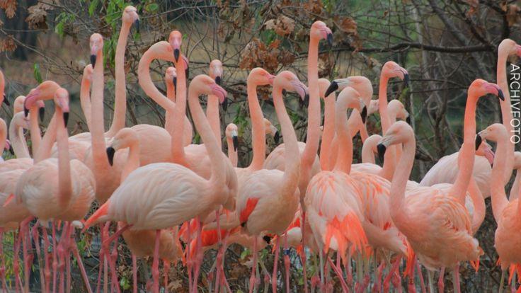 "Sturm ""Xavier""wütet im Berliner Zoo - 18 Flamingos von herabfallenden Ästen getötet - Berlin - Bild.de"