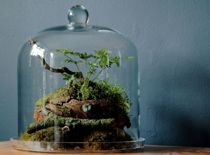 Woodland Bell Jar Terrarium | Flickr - Photo Sharing!
