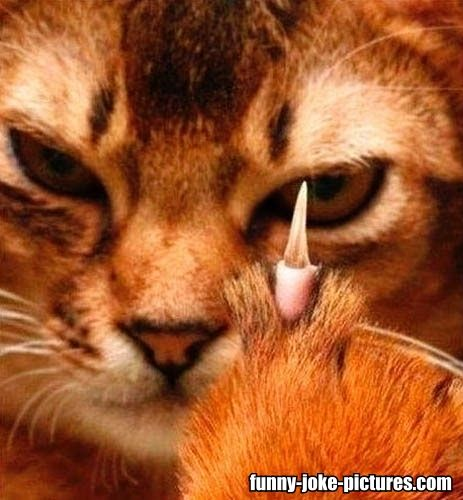 Funny Angry Middle Finger Cat Meme Picture | Funny Joke Pictures