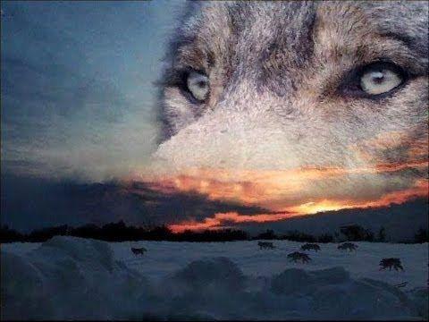 одинокий волк скачать торрент