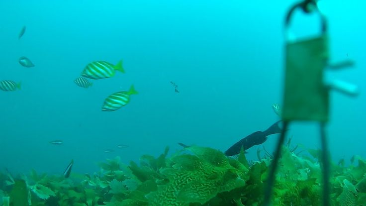 Fishing Perth WA a Glimpse Underwater in the Indian Ocean