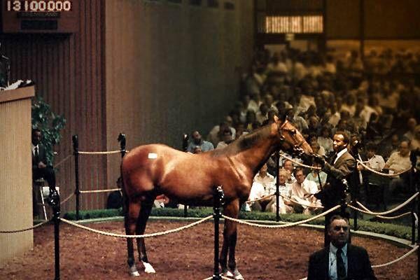 Самые дорогие лошади жеребцы в мире