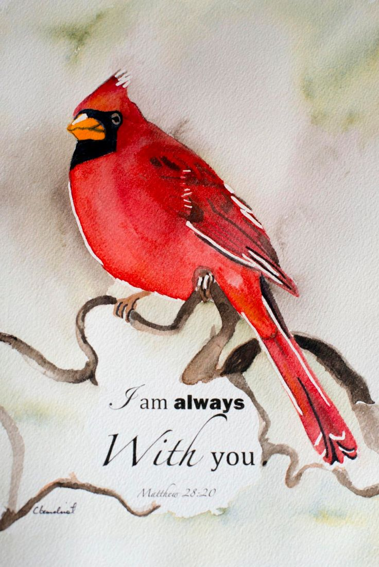 Watercolor Painting Of Cardinal Red Bird With Bible Verse