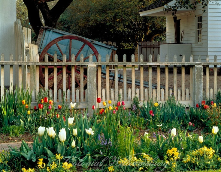 Beautiful Taliaferro Cole House Garden With Tulips In Bloom And Taliaferro Cole Shop  With Cart · Williamsburg VirginiaColonial WilliamsburgHouse ...