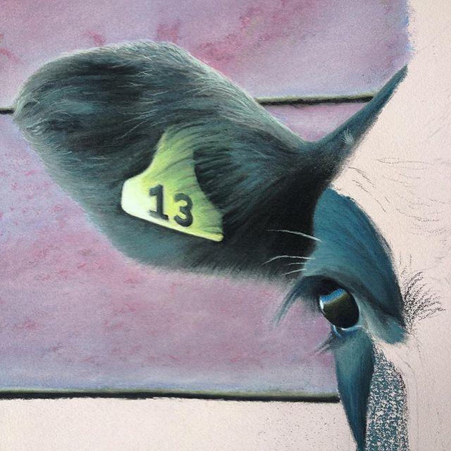 Today's work in progress shot of my latest #painting #pastel #pastelpainting #drawing #sketch #picoftheday #art #artwork #cow #cows #farmanimals #eartag #ear  #eye #luckyforsome #artist #michaelfreeman #kiwimatador #newzealand #thirteen #realism #realistic #hyperrealism #hyperrealistic #photorealism #photorealistic