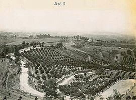 Kurrajong orchards, Blue Mountains, New South Wales of yesteryears.v@e