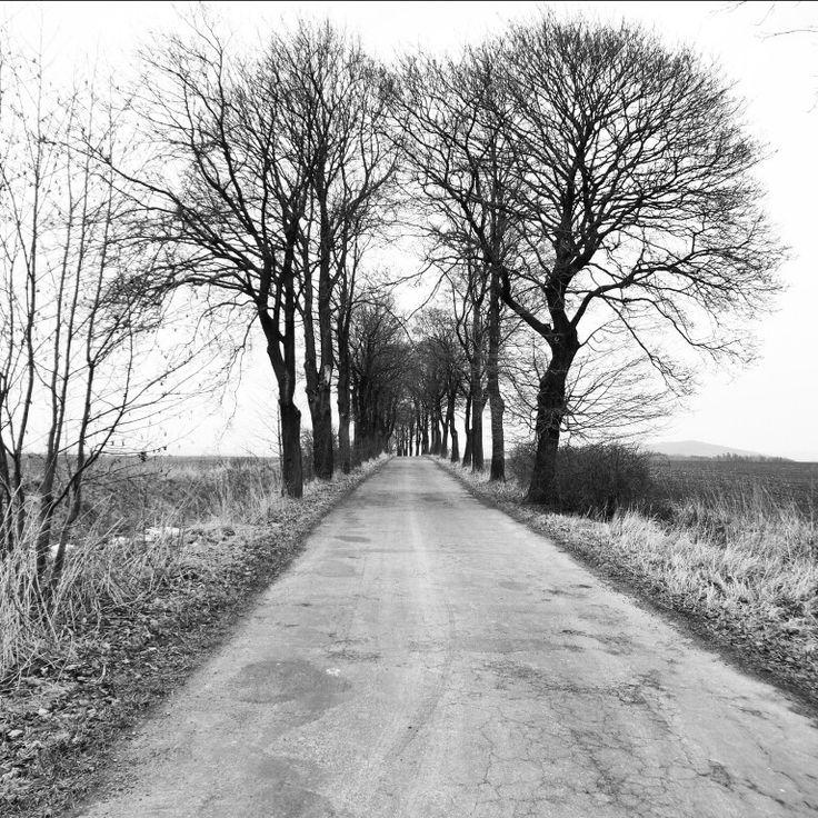 #polska #polna #droga ⭐ #polish #field #road ⭐ #ziemiaklodzka #dolnoslaskie #polska #poland ⭐#niedziela #sunday #pole #drzewa #trees ⭐#bw #bnw #bnwpoland #bnwmaster #czarnobiale  #bnwworld