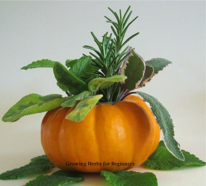 what herbs go with pumpkin