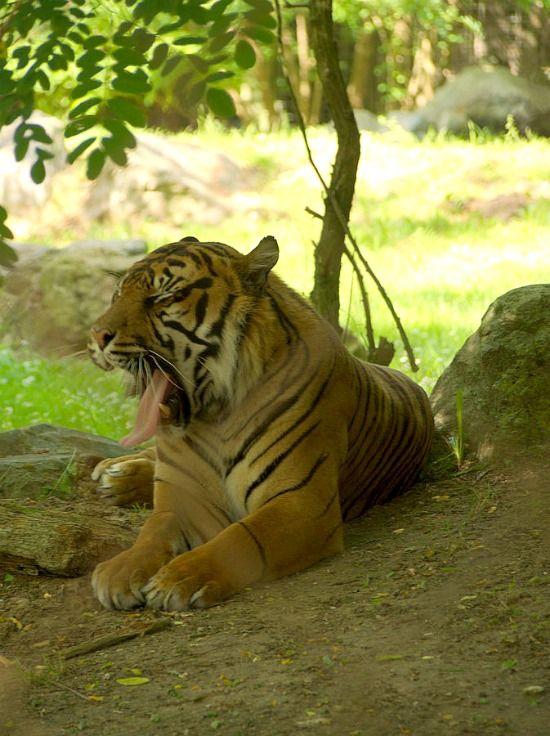 plus de 1000 id es propos de zoo de la fleche sur pinterest zoos lions blancs et le zoo. Black Bedroom Furniture Sets. Home Design Ideas